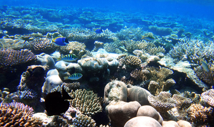 underwater-house-reef.jpg