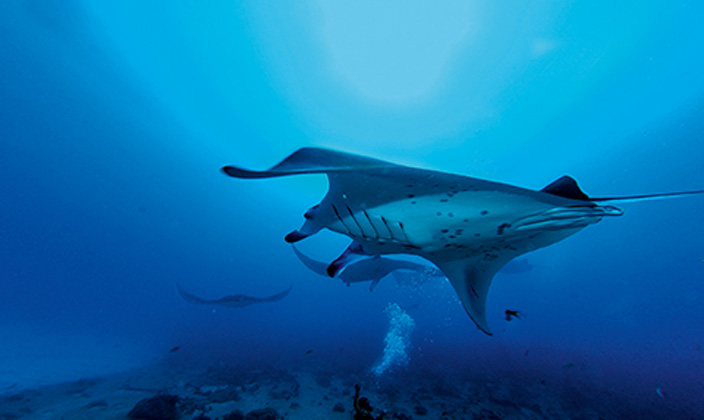 moofushi-maldives-diving-5.jpg