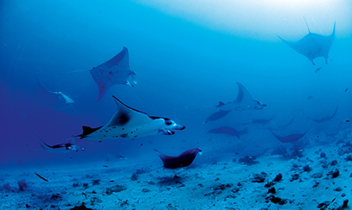 moofushi-maldives-diving-6.jpg