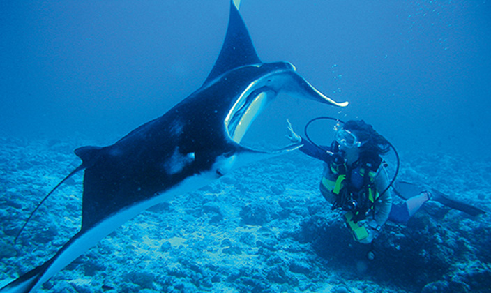 moofushi-maldives-diving-manta-1.jpg