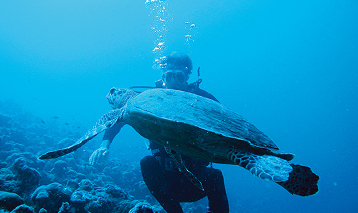 moofushi-maldives-diving-turtle-1.jpg