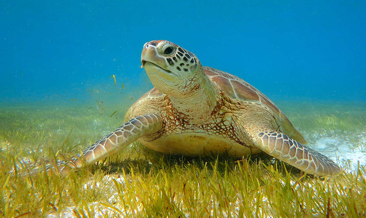 kudadoo-swim-with-turtles-1600x900(1).jpg
